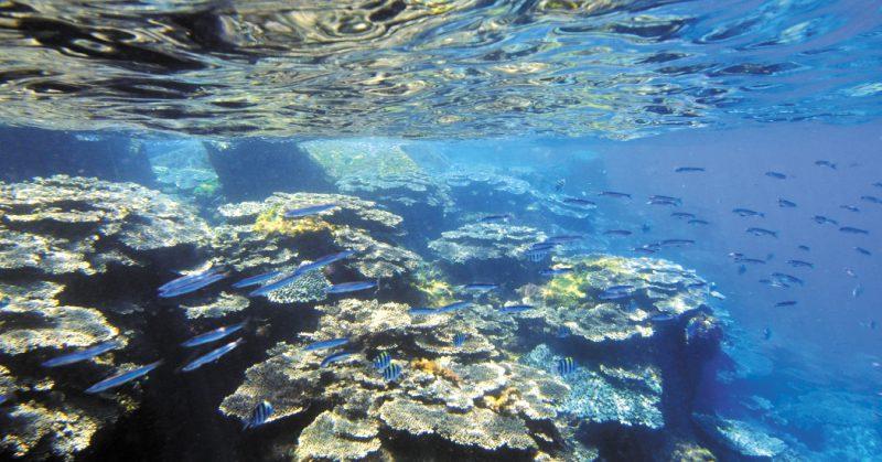鵜来島の海